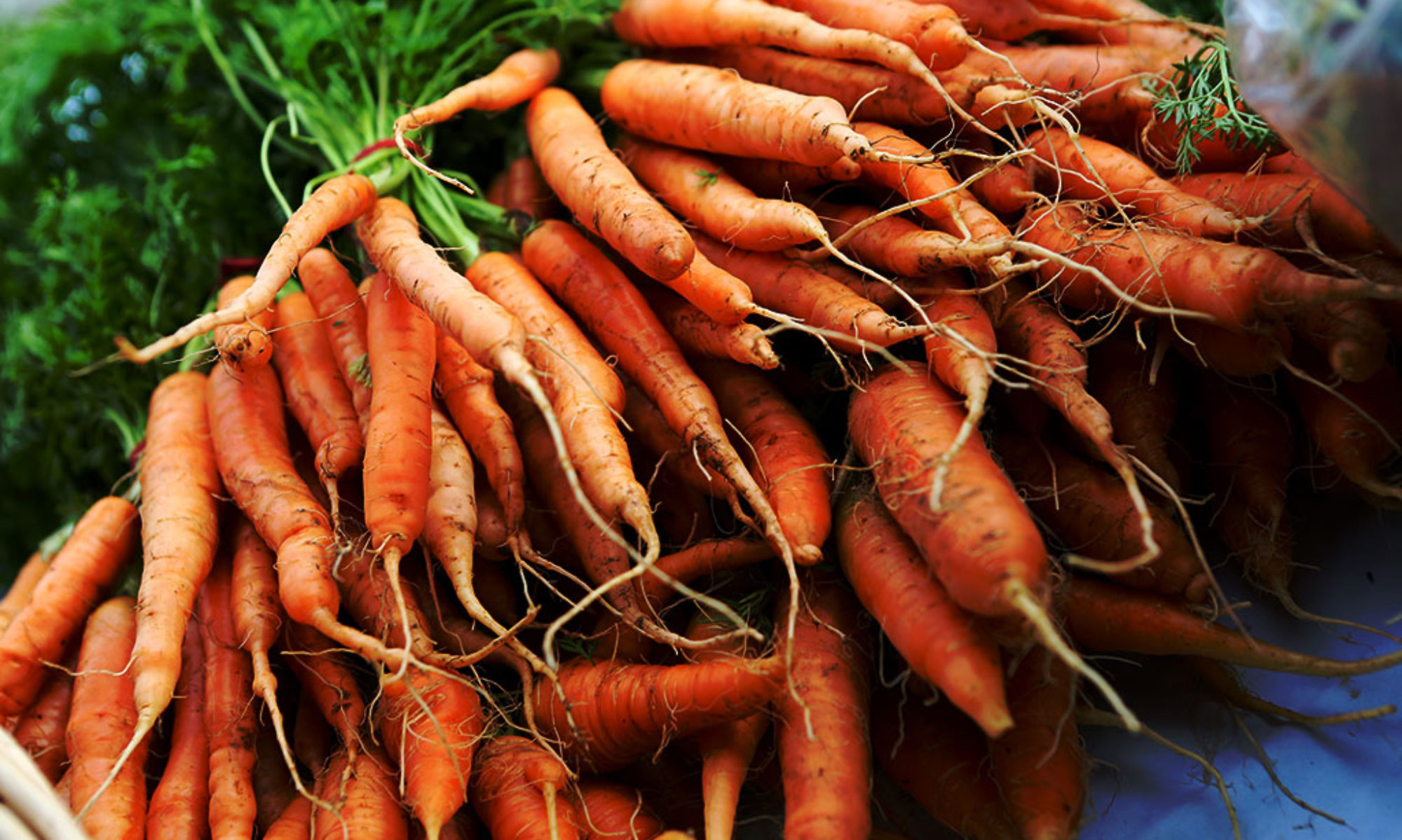 cropped-Carrots_Overlay60_1024x681.jpg