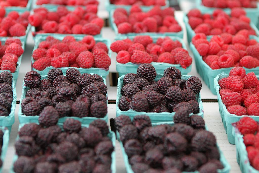 berries1024x681